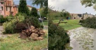 """""""Non c'è più un albero dritto"""": il video dalla zona delle Torricelle dopo il temporale di Verona"""